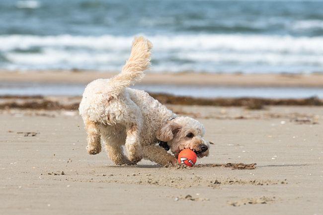 cane che gioca su una spiaggia della Romagna