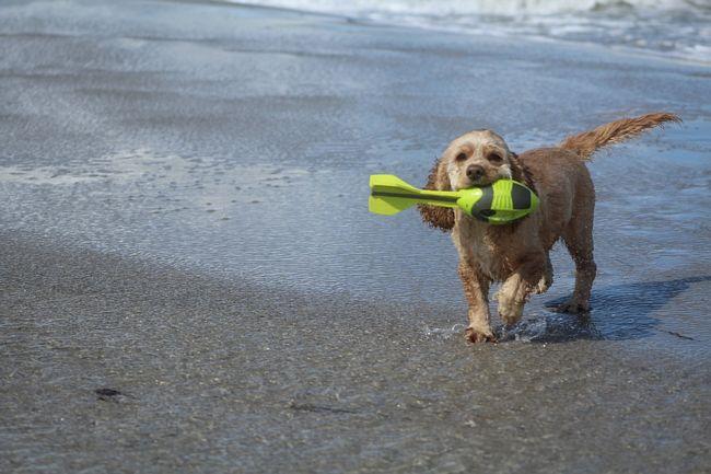 Spiaggia per cani sulla Riviera Romagnola