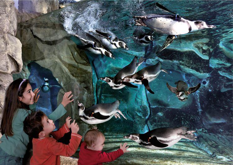 Bambini davanti alla vasca dei pinguini dell'Acquario di Cattolica