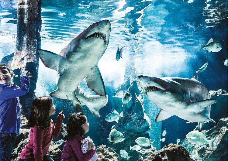Bambini davanti alla vasca degli squali all'Acquario di Cattolica