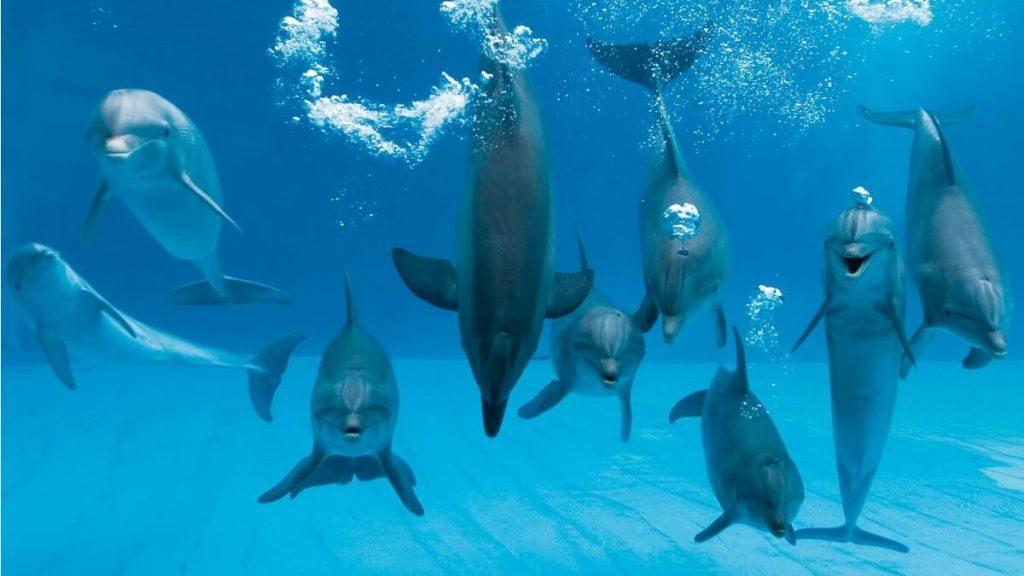 Delfini al delfinario di Riccione
